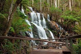 Toorongo Falls Reserve Walks, Noojee